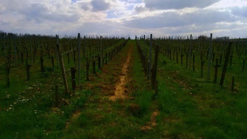 chambre d'hôtes familiale Bordeaux centre : Les chemins d'Aquitaine
